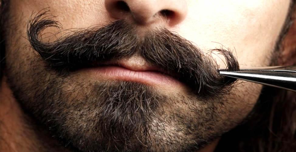 Cuidando do seu Beardstache
